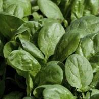 spinaci-da-taglio