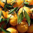 clementine-bio-10-kg