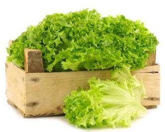 insalate-miste-bio-1kg