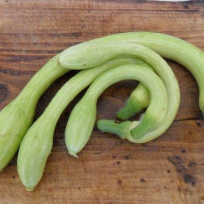 zucchine-trombetta-dalbenga-bio-1kg