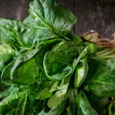 spinaci-radice
