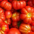 pomodori misti insalata grandi