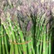 asparagi 01