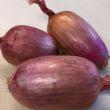 cipolle rosa Gasperi