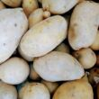 Patata gialla Almera Moronara