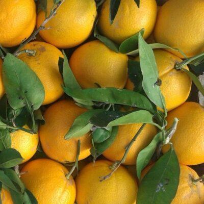 arance-bio-wn-2-scelta-10-kg
