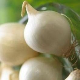 cipolla-fresca-bianca-500gr
