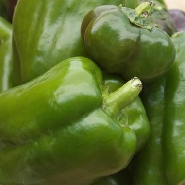lortica-peperoni-verdi-bio-1-kg