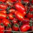 pomodori-da-conserva-bio-5kg