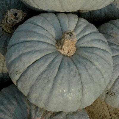 zucca-piacentina-bio-intera-3kg